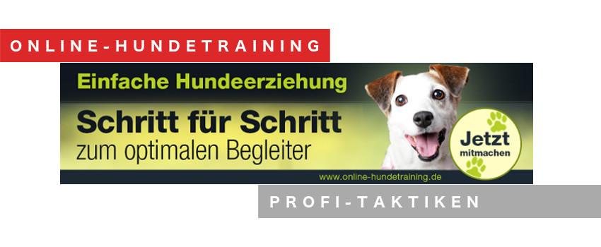 online-hundetraining-videokurs